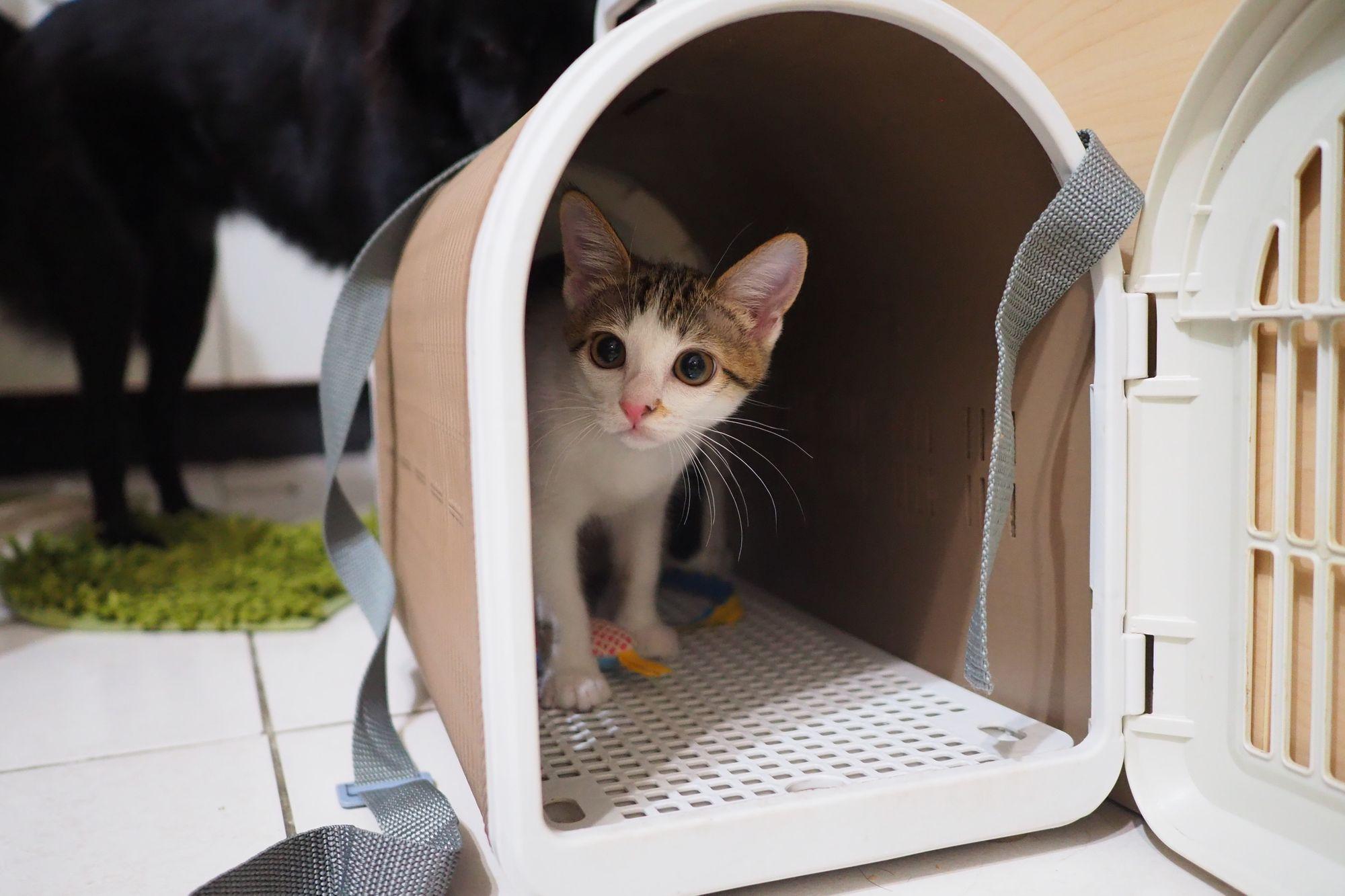 https://hahow.in/courses/5d1429dbac23d80020ad8544?utm_source=blog&utm_medium=random&utm_campaign=cat-healing-methods